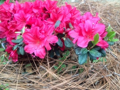 Gardening on a Budget - AProverbsWife.com